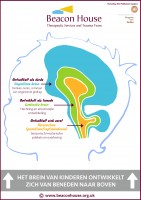 3 stages of braindevelopment